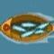 Attrape poisson – …
